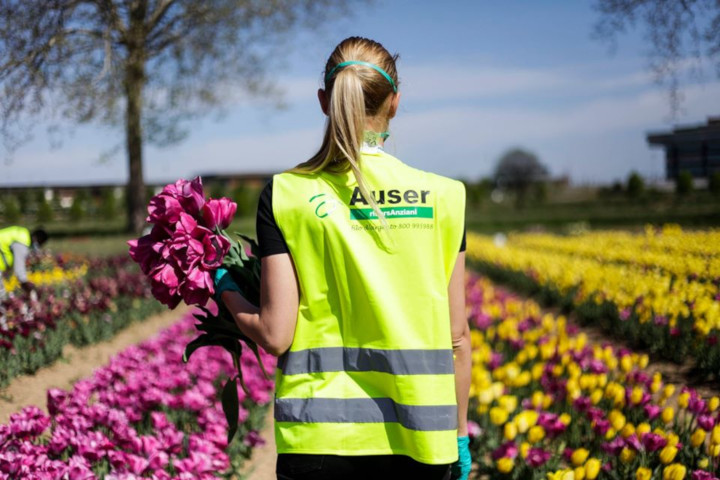 auser_tulipani-720